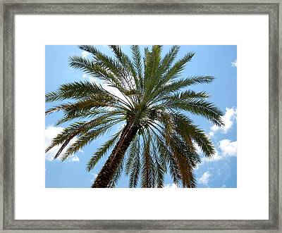 Palm Tree Framed Print by Michael Albright