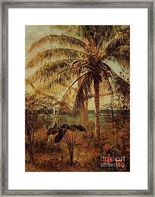 Palm Tree, Nassau, 1892  Framed Print by Albert Bierstadt