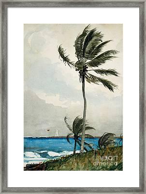 Palm Tree, Nassau, 1898 Framed Print