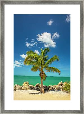 Palm Tree Of Colorful Key West Framed Print