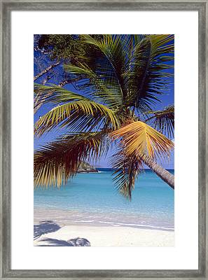 Palm Tree On A Caribbean Beach Framed Print by George Oze