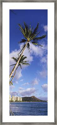 Palm Tree On The Beach, Diamond Head Framed Print by Panoramic Images