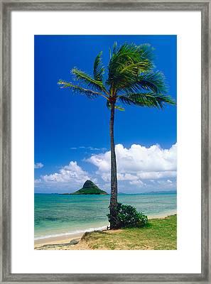 Palm Tree On The Beach Kaneohe Bay Oahu Hawaii Framed Print by George Oze