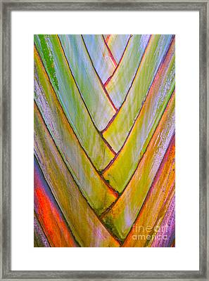 Palm Tree Pattern Framed Print