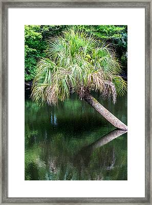 Palm Tree Framed Print by Paul Freidlund