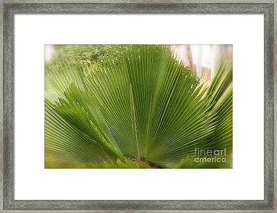 Palm Tree Framed Print by Paula Deutz