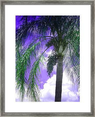 Palm Tree Seeding Framed Print by Rosalie Scanlon