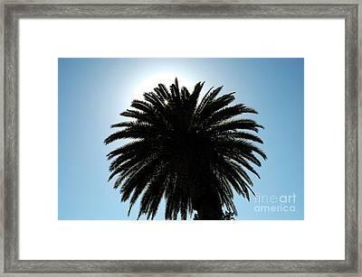 Palm Tree Silhouette Framed Print