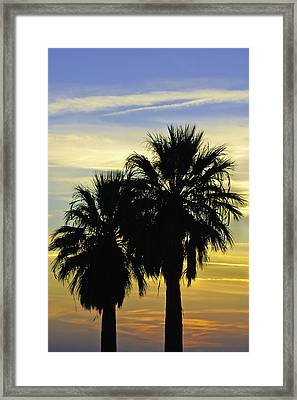 Framed Print featuring the photograph Palm Tree Silhouette by Sherri Meyer