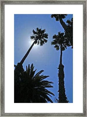 Palm Tree Silouette Framed Print