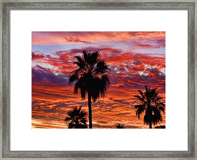 Palm Tree Sunset Framed Print by James BO  Insogna