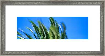 Palm Tree Top In The Wind Framed Print by Panoramic Images