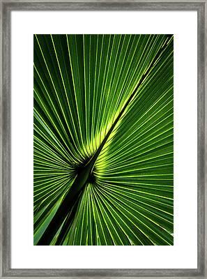 Palm Tree With Back-light Framed Print