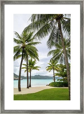 Palm Trees 1 Framed Print