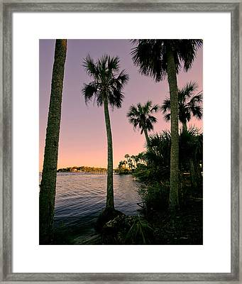 Palm Trees And Pink Skies Framed Print