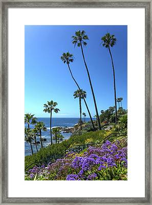 Framed Print featuring the photograph Palm Trees At Heisler Park by Cliff Wassmann