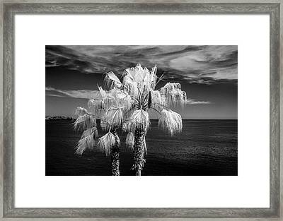 Framed Print featuring the photograph Palm Trees At Laguna Beach In Infrared Black And White by Randall Nyhof