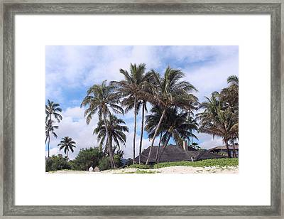 Palm Trees At The Beach Framed Print