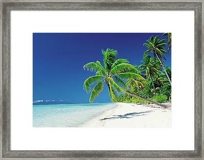 Palm Trees Bending Over The Beach Framed Print by Panoramic Images