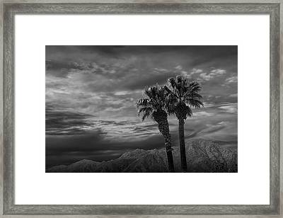Framed Print featuring the photograph Palm Trees By Borrego Springs In Black And White by Randall Nyhof