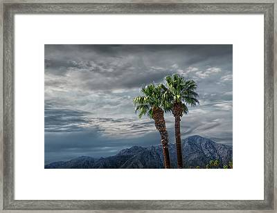 Framed Print featuring the photograph Palm Trees By Borrego Springs In The Anza-borrego Desert State Park by Randall Nyhof