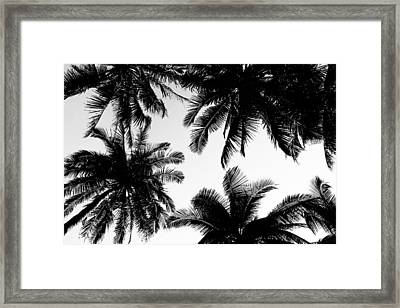 Palm Trees Framed Print by Fine Arts