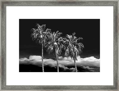 Framed Print featuring the photograph Palm Trees In Black And White On Cabrillo Beach by Randall Nyhof