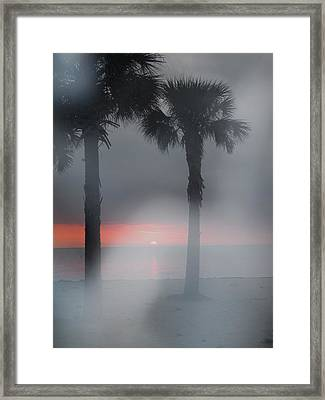 Palm Trees In The Fog Framed Print by Penfield Hondros