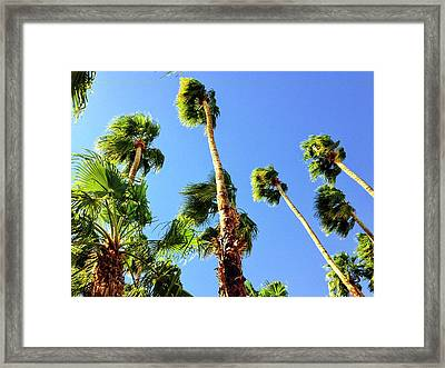 Palm Trees Looking Up Framed Print