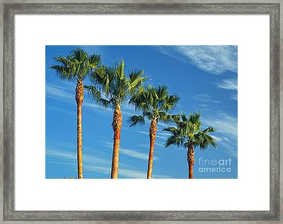 Palm Trees Framed Print by Marc Bittan