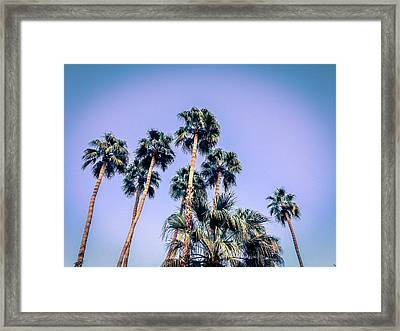 Palm Trees Palm Springs Summer Framed Print