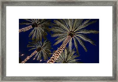 Palm Trees Wrapped In Lights Framed Print
