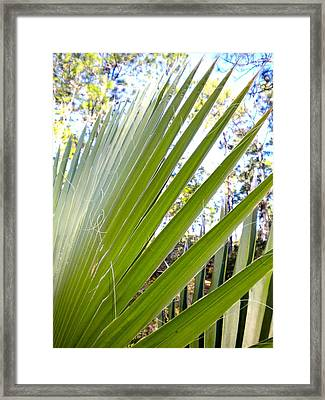 Framed Print featuring the painting Palmetto 1 by Renate Nadi Wesley