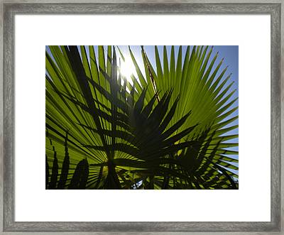 Framed Print featuring the photograph Palmetto 3 by Renate Nadi Wesley