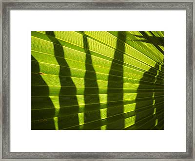 Framed Print featuring the photograph Palmetto 4 by Renate Nadi Wesley