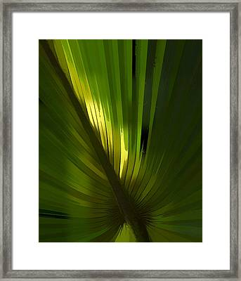 Palmetto Embrace Framed Print