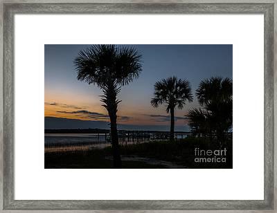 Palmetto Sky Framed Print
