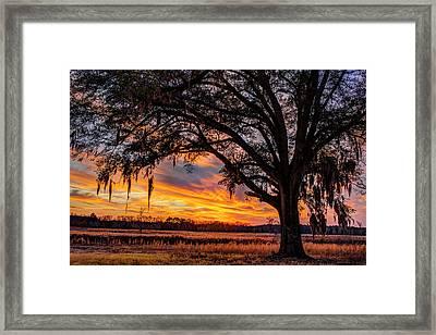 Palmetto Sunset Framed Print
