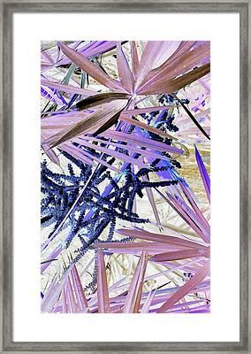 Palmpourri Framed Print