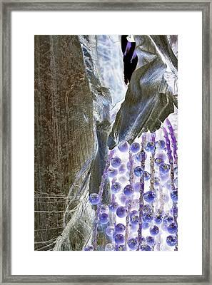 Backlit Blueberries Framed Print