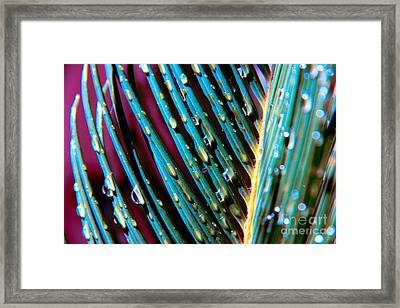 Palms After A Rainy Day Framed Print by Mariola Bitner