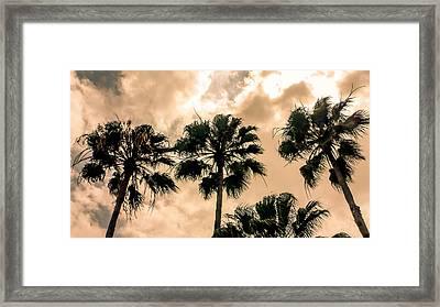 Palms Against The Sky Framed Print