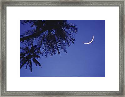 Palms And Crescent Moon Framed Print by Anne Rippy
