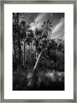Palms And Palmettos Framed Print by Marvin Spates