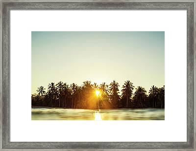 Palms And Rays Framed Print
