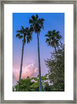 Palms And Storms Framed Print
