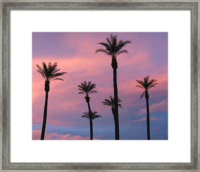 Framed Print featuring the photograph Palms At Sunset by Phyllis Kaltenbach