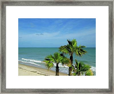 Palms At Vero Beach Framed Print