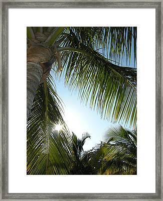Palms Framed Print by Audrey Venute