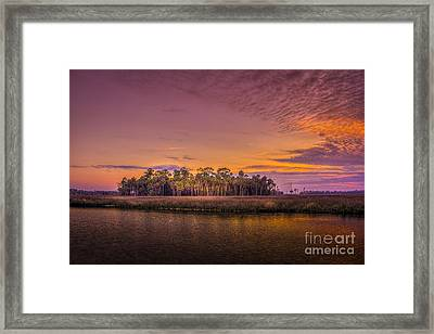 Palms Delight Framed Print by Marvin Spates